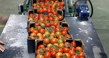 5 more Turkish firms to export tomatoes to Russia
