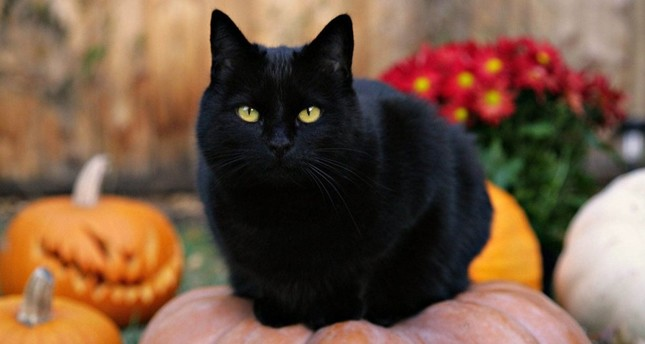 Black cats have a bad reputation but it is just a baseless superstition.