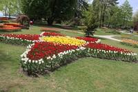 Turkish Tulip Festival brightens up park in Switzerland
