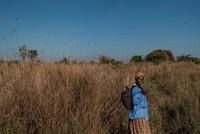 Locust plague spreads to South Sudan