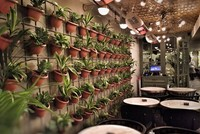 Plants are the jewels of a home. They can bring a breath of fresh air to any room and create a positive aura. There are numerous house plants that you can choose from; however, growing them indoors...