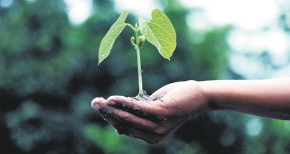 Venture seeds grow from soil
