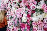 Deciphered rose genome to help growers improve flower traits