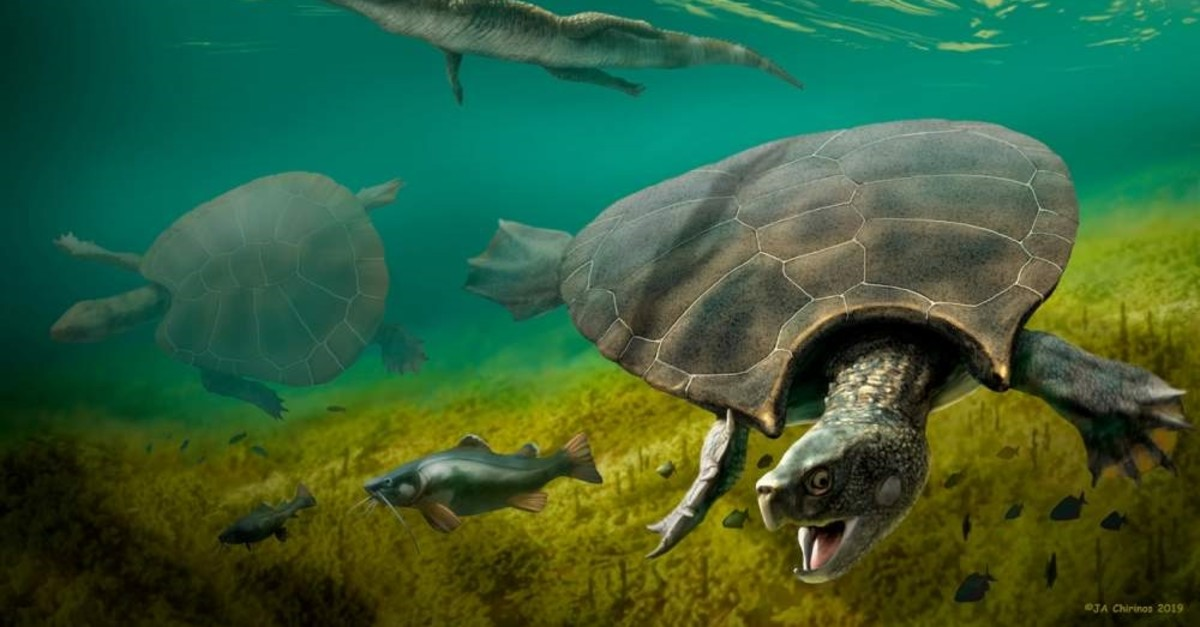 The huge extinct freshwater turtle Stupendemys geographicus, that lived in lakes and rivers in northern South America during the Miocene Epoch, is seen in an illustration released Feb. 12, 2020. (Handout via Reuters)