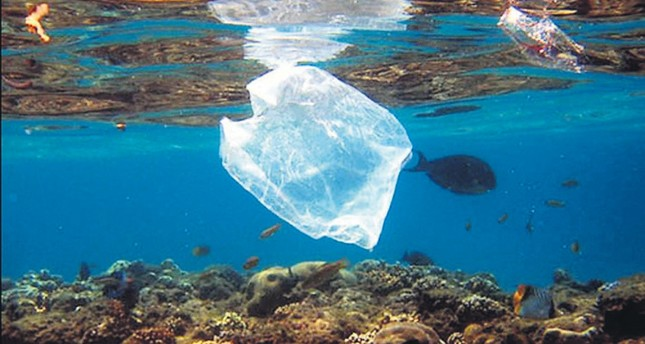 The world's oceans and their inhabitants suffer from excessive plastic bag usage.