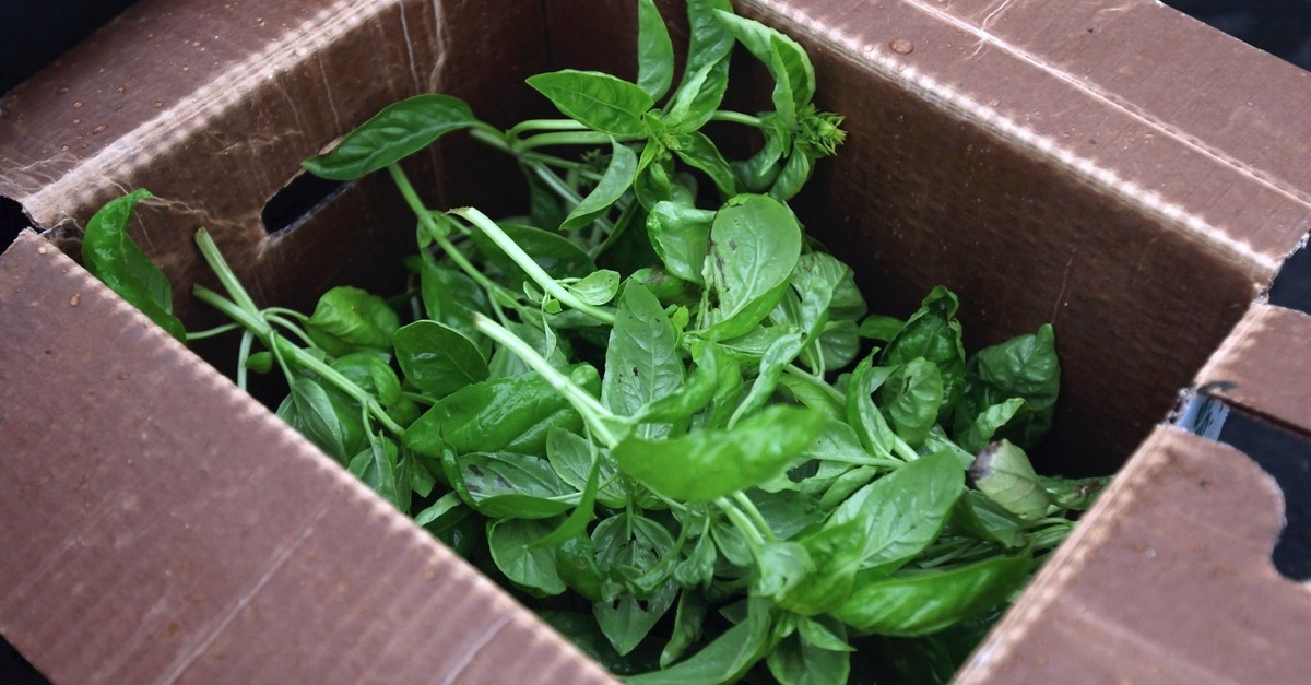 In this photo, Basil harvested at City Farm is packaged for delivery in Chicago, Illinois.