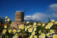 في الربيع.. تركيا على موعد مع أجمل مهرجانات الحصاد