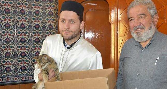 مسجد في كيرك كاله التركية يتبنى قطة وصغارها السبعة بعد ولادتها في المنبر
