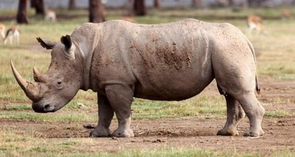 Poaching crisis in Africa turns into tragedy