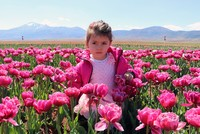Tulips in full bloom across Turkey