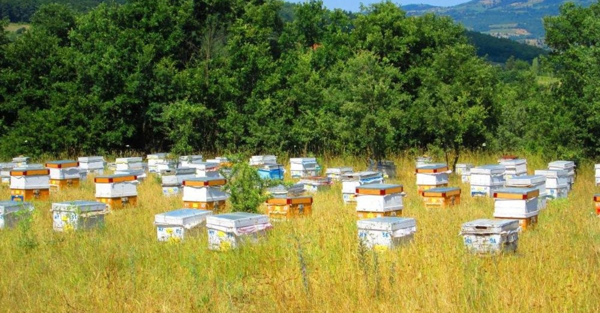 Honey producers on Mount Ida collect the honey from bees at the end of summer. (DHA Photo)