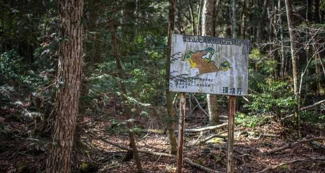 غابة الانتحار في اليابان.. ماذا تعرف عنها؟