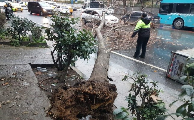 Strong winds knock down a tree in ?i?li, Istanbul, Dec. 30, 2019. DHA Photo