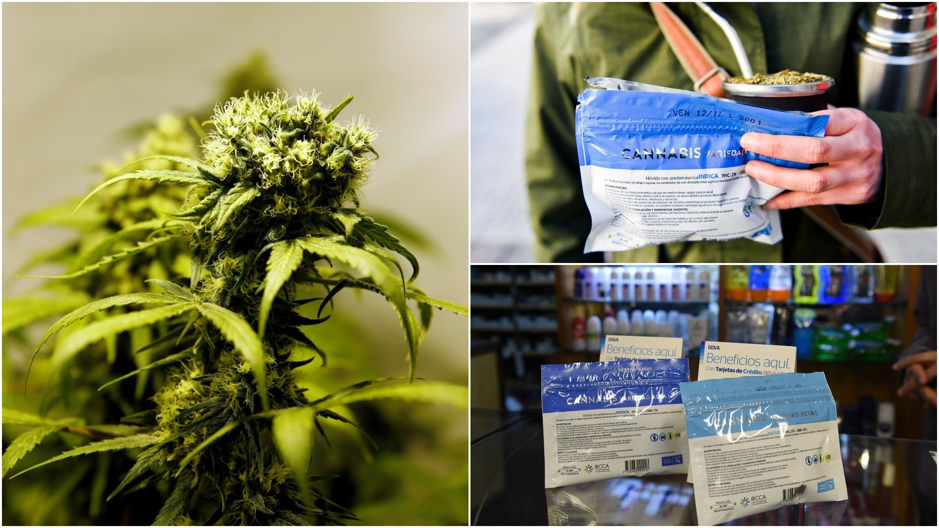 Pharmacies in Uruguay start selling marijuana from Wednesday under the final phase of a 4-year-old law. (REUTERS/AFP/AP Photos)