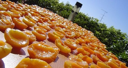 Apricot capital Malatya boosts export by volume, value