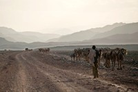 Hope for peace as Ethiopia backs down in Eritrea standoff