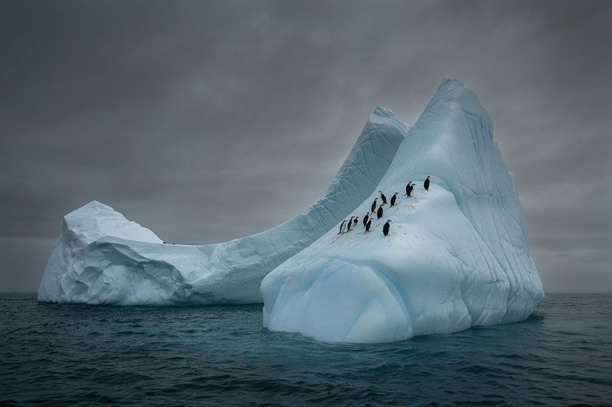 Travelers, Antarctica - 3rd place in The Beauty Of The Nature category