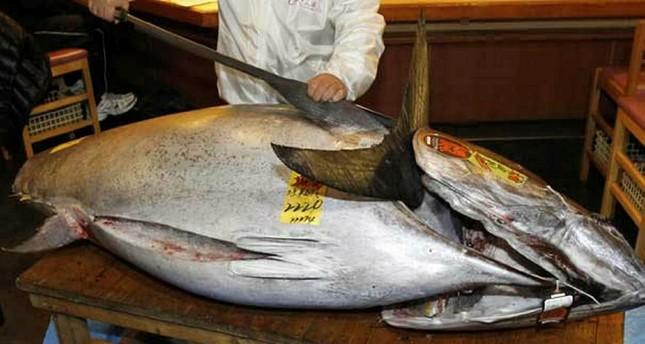صياد تركي هاوٍ يصطاد سمكة تونة بطول مترين في بحر إيجة