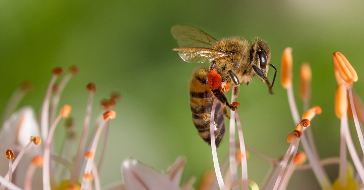 The decline in the population of wild bees is believed to be related to global warming.