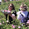 Isparta, Land of Roses, welcomes thousands for annual harvest