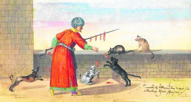 Die Liebe Zu Katzen Ein Zeichen Des Glaubens Im Islam