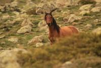 صور أخاذة لخيول برية في غرب الأناضول