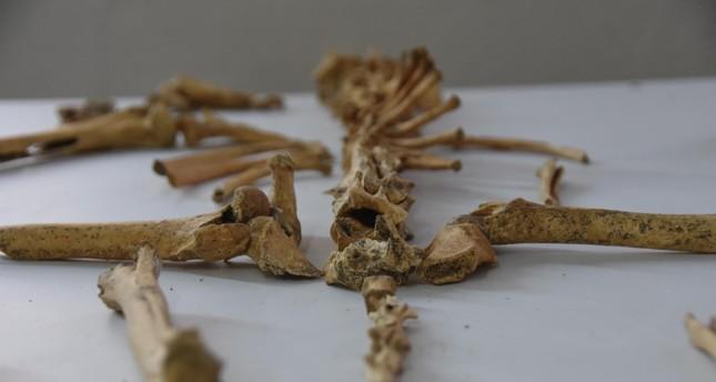 Bones discovered during excavations at Küllüoba mound displayed (DHA Photo)