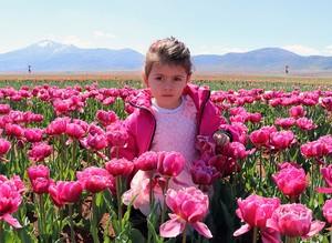 Tulips in full bloom across Turkey