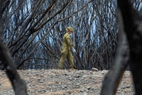 Relief as rain falls on catastrophic Australian bushfires