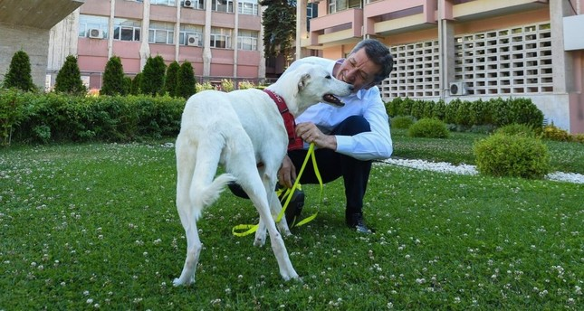 National Education Minister Ziya Selçuk with Pergel, a stray dog adopted by the ministry.