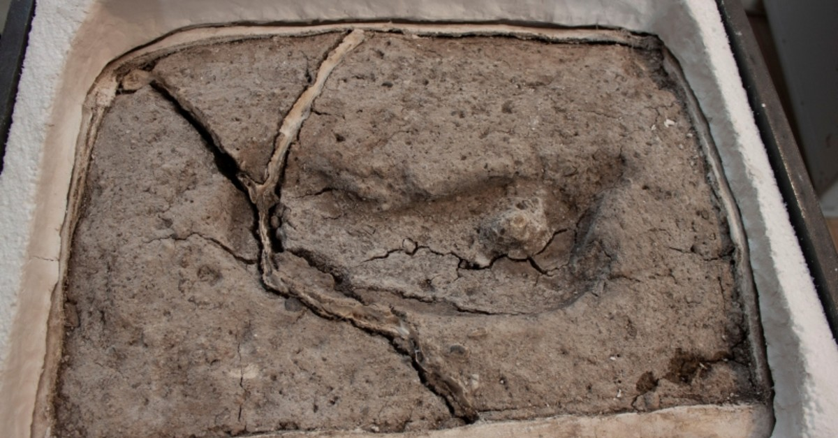 An ancient footprint is pictured, having formed cracks due to desiccation after being extracted from its original site, in Osorno, Chile sometime in April 2019. (Reuters Photo)