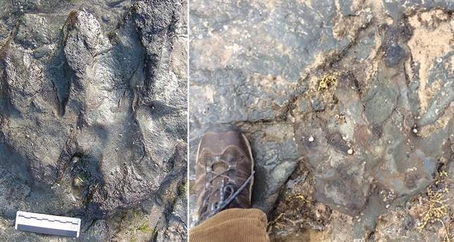 115 Mio Jahre alter Dino-Fußabdruck beschädigt