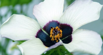 pHundreds of flower species have evolved the ability to project ethereal halos of blue light invisible to humans in order to lure pollinating bees, researchers revealed Wednesday./p  pIn...
