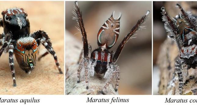 صورة من حساب العالم الأسترالي جوزيف شوبرت مكتشف العناكب j_schubert@