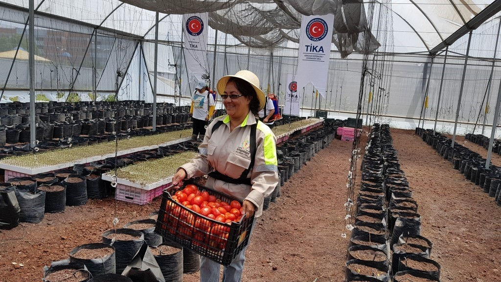 Women work in a greenhouse renovated by Tu0130KA in Iztapalapa, Mexico City.