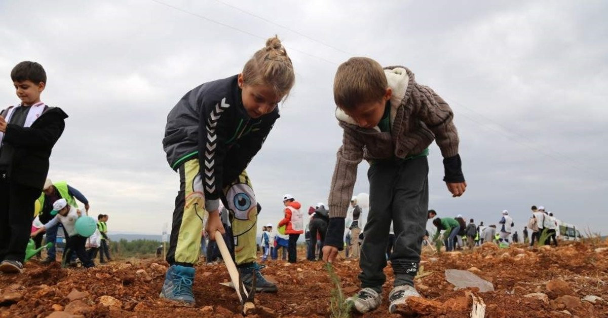 Children in Turkey's southern Mu?la province plant saplings as part of the National Forestation Day organized by the Ministry of Agriculture and Forestry on Nov. 11, 2019 (AA Photo)