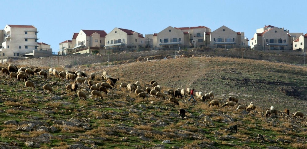 A Palestinian shepherd with sheep near the Jewish settlement of  Ma'ale Adumim, east of Jerusalem.