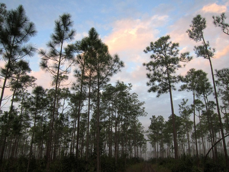 Everglades National Park, Fla., U.S. (File Photo)