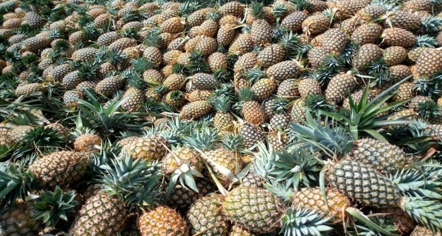 Pineapples are a main source of income for farmers in Guinea and are in high demand from abroad.