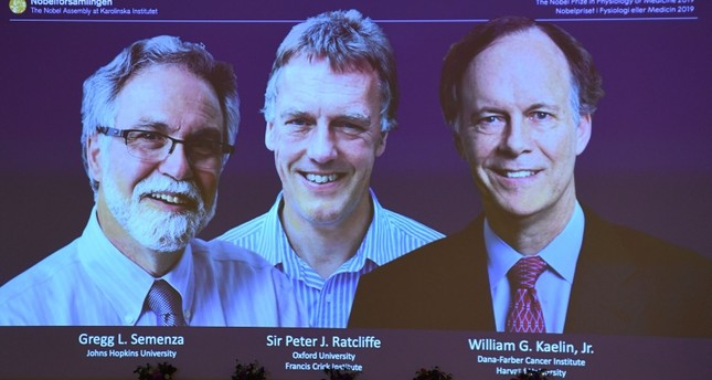 The winners of the 2019 Nobel Prize in Physiology or Medicine L-R Gregg Semenza, Peter Ratcliffe and William Kaelin appear on a screen during a press conference at the Karolinska Institute in Stockholm, Sweden, on Oct. 7, 2019. AFP