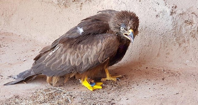 Turkish man equips eagle with a 3D-printed foot