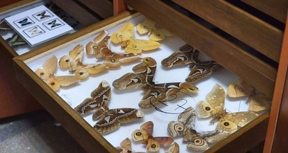 Decades of insects on display at Istanbul museum