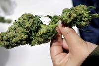 British government reviews legalizing medicinal use of cannabis