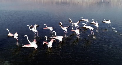 İzmit's wetland a sanctuary for migratory birds