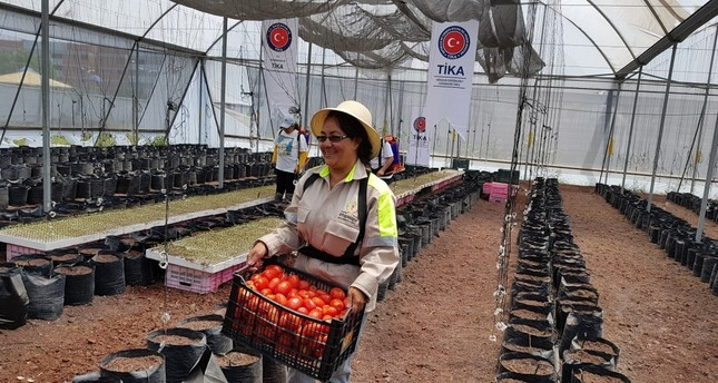 Women work in a greenhouse renovated by TİKA in Iztapalapa, Mexico City.