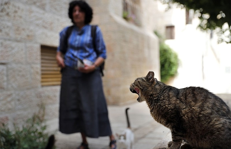 Jerusalem's 'cat lady' cares for hundreds of felines