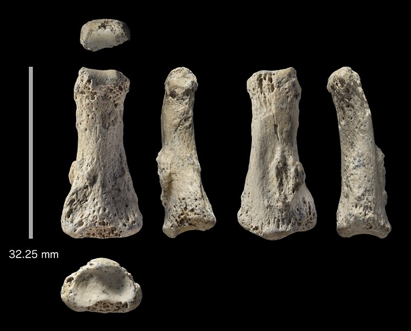 The single fossil finger bone of Homo sapiens - pictured from various angles - from the Al Wusta site, Saudi Arabia is pictured in this undated handout composite photo obtained by Reuters April 9, 2018. (Reuters Photo)