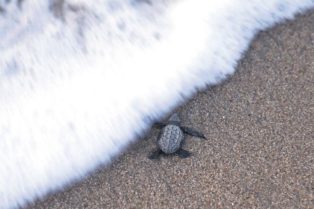 Kenya's sea turtles are increasingly under siege from humanity's plastic binge.