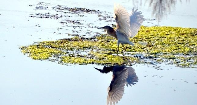 اليونسكو تدرج محمية الطيور في نهر قيزيل إرماك على لائحة تراث العالمي