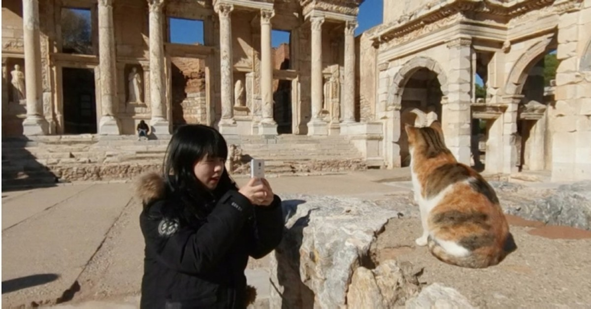 A tourist takes a photo of a cat in the ancient city of Ephesus in Turkey's western Izmir province (File Photo)